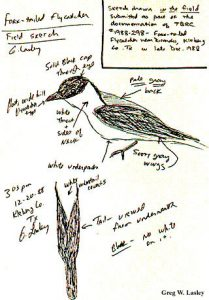 bird-watcher-notes