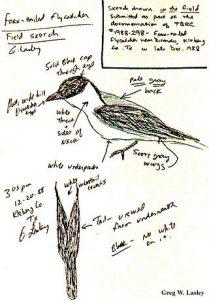 bird-watcher-notes
